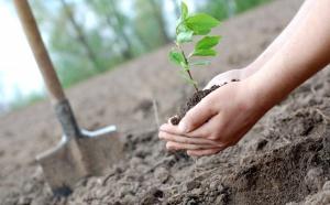 Май месяц, помимо многочисленных праздников, ознаменуется для жителей Москвы тем, что на улицах города будет высажено более 19 тысяч кустарников.